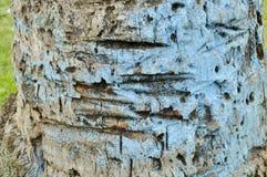 Tronco de árvore da textura imagens de stock royalty free