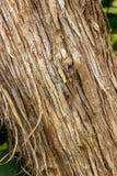Tronco de árvore diagonalmente com sua casca fotos de stock royalty free