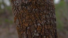 Tronco de árvore do envelhecimento no fim acima vídeos de arquivo