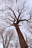Tronco de árvore e coroa dos ramos sem as folhas contra o céu imagens de stock