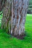 Tronco de árvore e ferramenta de jardinagem Foto de Stock