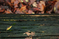 Tronco de árvore e folhas de outono verdes no fundo Imagem de Stock