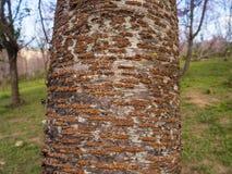 Tronco de árvore e fundo do borrão Imagem de Stock Royalty Free