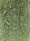 Tronco de árvore e fundo do MOS fotografia de stock royalty free
