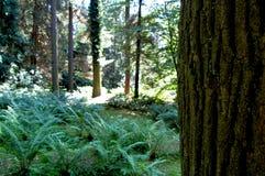 Tronco de árvore em um fundo do esclarecimento da floresta foto de stock