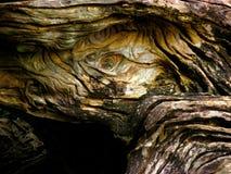 Tronco de árvore entortado Foto de Stock