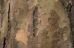 Tronco de árvore flocoso imagem de stock royalty free