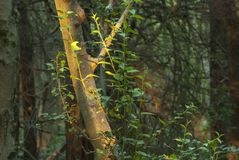 Tronco de árvore iluminado pelo sol imagem de stock