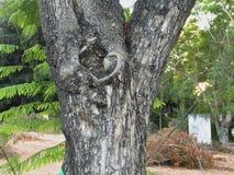 Tronco de árvore de madeira do corte da textura imagens de stock