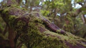 Tronco de árvore molhado coberto de vegetação com o musgo em uma floresta úmida tropical video estoque