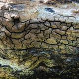 Tronco de árvore muito velho Imagens de Stock Royalty Free