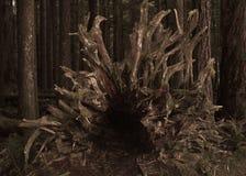 Tronco de árvore na floresta Fotografia de Stock Royalty Free