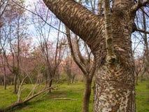 Tronco de árvore na floresta e no céu azul Fotos de Stock