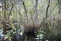 Tronco de árvore na lagoa Fotografia de Stock Royalty Free