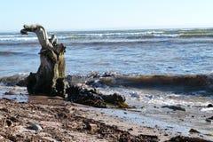 Tronco de árvore na praia Fotografia de Stock Royalty Free