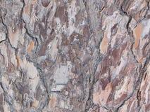 Tronco de árvore no campo Imagem de Stock