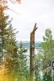 Tronco de árvore podado velho fotos de stock royalty free