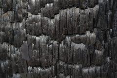 Tronco de árvore preto queimado como a exibição a alarmar-se contra a destruição das florestas pelo fogo imagem de stock