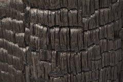 Tronco de árvore preto queimado como a exibição a alarmar-se contra a destruição das florestas pelo fogo fotografia de stock royalty free