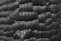 Tronco de árvore preto queimado como a exibição a alarmar-se contra a destruição das florestas pelo fogo fotografia de stock