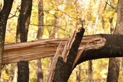 Tronco de árvore quebrado imagens de stock