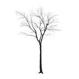 Tronco de árvore sem folhas Fotografia de Stock Royalty Free