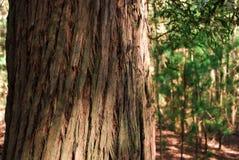 Tronco de árvore Textured na sombra e na luz Imagem de Stock