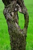 Tronco de árvore velho imagem de stock