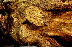Tronco de árvore velho abstrato Holey imagens de stock