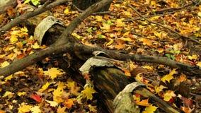 Tronco de árvore velho no outono filme