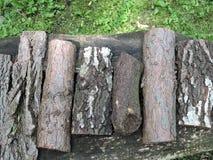 Tronco de árvores Fotografia de Stock Royalty Free