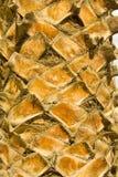 Tronco de Backgraund de uma palmeira Foto de Stock