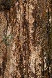 Tronco de Cypress Fotos de archivo
