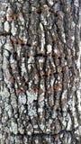 Tronco de la corteza de árbol Fotografía de archivo libre de regalías