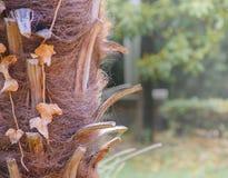 Tronco de la palma Imagen de archivo libre de regalías