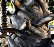 Tronco de la palmera Foto de archivo