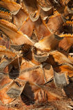 Tronco de la palmera. Imagen de archivo libre de regalías