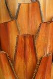 Tronco de la palmera Fotos de archivo libres de regalías