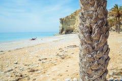 Tronco de la palmera Foto de archivo libre de regalías
