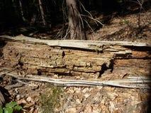 Tronco de madeira Imagens de Stock Royalty Free