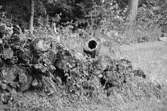Tronco de madeira com furo no meio Foto de Stock Royalty Free