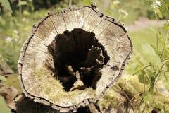 Tronco de madeira com furo no meio Imagem de Stock