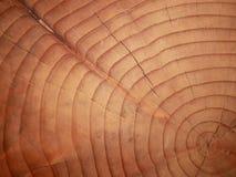 Tronco de madeira de seção transversal Fotos de Stock