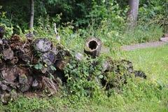 Tronco de madeira, madeira não convencional Fotos de Stock Royalty Free
