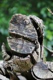 Tronco de madeira, madeira não convencional Imagens de Stock