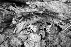 Tronco de madeira, madeira não convencional Imagens de Stock Royalty Free