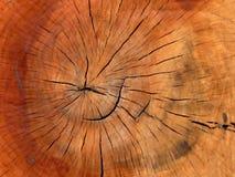 Tronco de madeira mim Fotografia de Stock Royalty Free