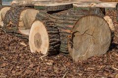 Tronco de madera Imagen de archivo libre de regalías