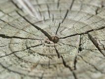 Tronco de madera agrietado viejo Fotos de archivo