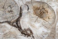 Tronco de madera del álamo del corte crudo con el fondo abstracto del adorno del modelo de la forma de la forma Foto de archivo libre de regalías